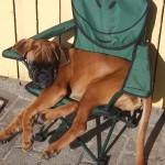 DK: Sonnenbad im Kinderstuhl