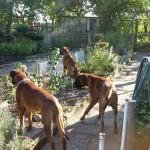 Die Bewacher des Gartens