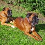 Angie und Ares