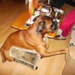 Der Rollator für Hunde
