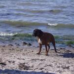 DK: Strandalarm