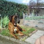 Ares Lieblingsplatz im Garten