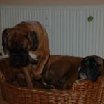 Alles teilen: Elton & Ares
