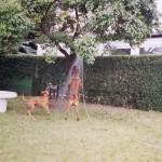 Wasserspiele mit Christo & Ares