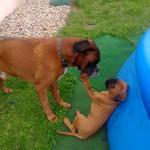 Ares und Dash