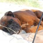 DK: Entspannen am Strand