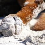 DK: Sandpfote Elton