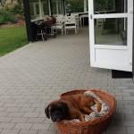 DK: Terrassenschlaf