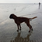 DK: Ab ins kühle Nass. Ballspiele in der Nordsee