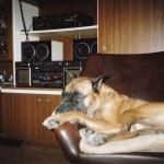 Überglücklich: Musik & der geliebte Sessel