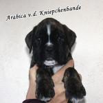 Arabica1
