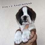 Ariba1-2